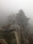 Tree on a misty cliff, Taishan,