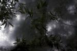 Melankolia - Levelek/Leaves