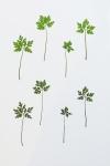 Eeuwig Herbarium #25