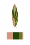 Colour Analysis #5