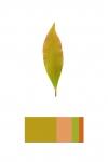 Colour Analysis #3