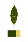 Colour Analysis #4