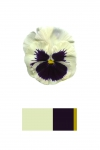 Anne Geene, Colour Analysis #1, 2014, from the series: Colour Analysis, 29,7 x 21 cm, edition 8 + 2 AP