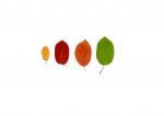 Colour Analysis (individual plant)