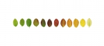 Colour Analysis Rosa pimpinellifolia (individual plant)