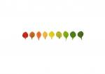 Colour Analysis berberis thunbergerii (individual plant)