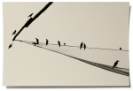 Hans Bol, Untitled #20, negative 2004, printed 2019. Silver gelatin, toning, gold leaf, image size 22 x 32,9 cm, framed 40 x 50 cm. Edition 7 + 1 AP