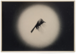 Hans Bol, Untitled #9B, negative 2006, printed 2020. UV ink on glass, 20 x 30 cm. Edition 5 + 1 AP