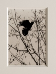 Hans Bol, Untitled 2019-III, negative 2019, print 2021, from the series 'White Crow' | Platinum-palladium print, framed in passepartout w/ museum glass | Image 18 x 12 cm, frame 39,5 x 34 cm | Also available in 30 x 20 cm | Ed. 3 + 1 AP