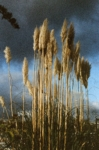 Victoire Eouzan, La Calme avant La Tempête, 2020, from the series Cette Vue Que Je N'aurai Plus | Archival pigment print, box frame | 55 x 36,5 cm and 82 x 55 cm | Ed. 3 + 1 AP